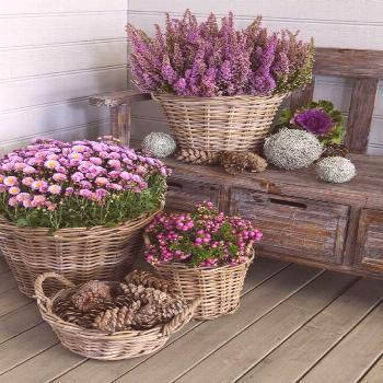 Decorate the entrance with heather and chrysanthemums in purple shades © PHOTO: Master Gr ...#c