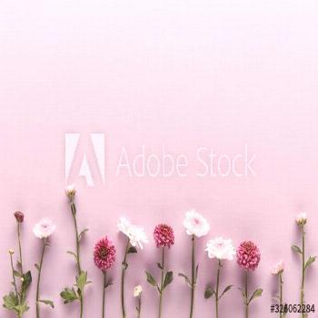 flat lay with blooming spring Chrysanthemums on violet background with copy space ,