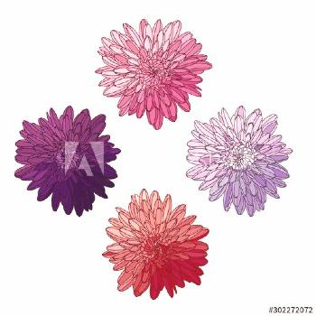 Floral design. Set with asters or chrysanthemums. Several variations of the elements for the design